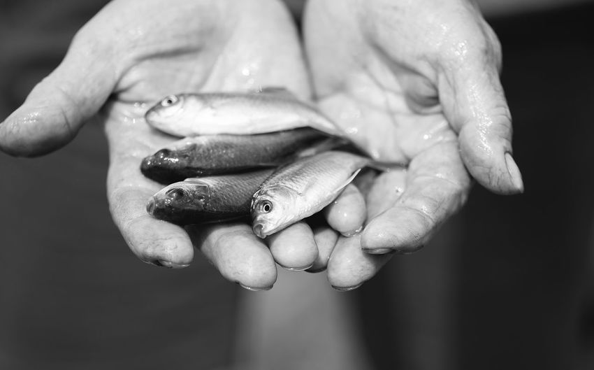 Cropped wet hands showing dead fish
