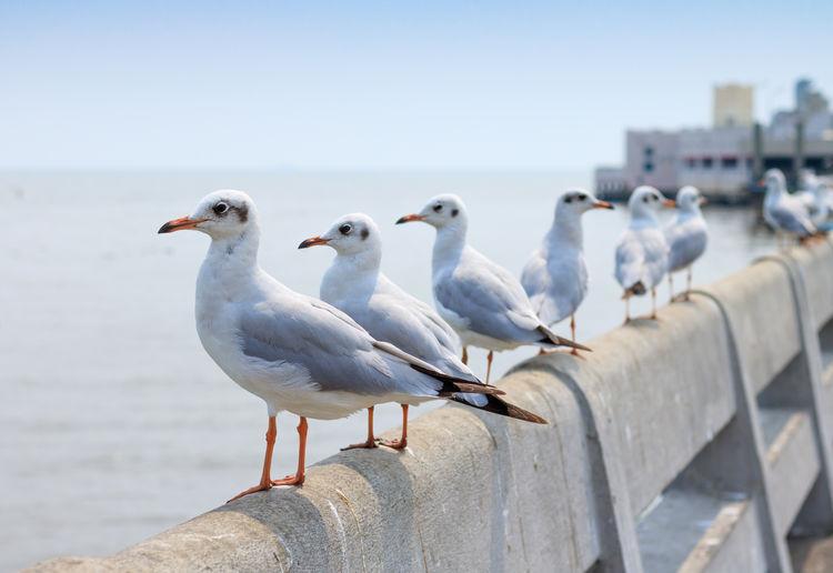 Seagulls perching on railing against sea