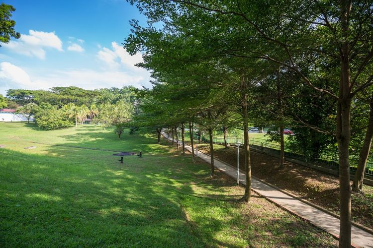 Singapore Landscapes: Green fields and tree lined path Open Field Beauty In Nature Day Footpath Grass Green Color Growth Land Landscape Nature No People Outdoors Park Plant Shadow Sky Sunlight Tranquility Tree