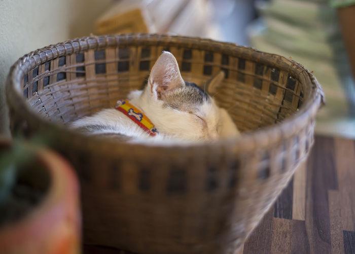 Close-up of a cat in basket