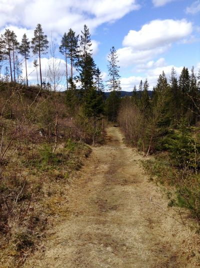 A sunny day taking a walk. Nature Sun Wood Norway Those Trees Tho Path