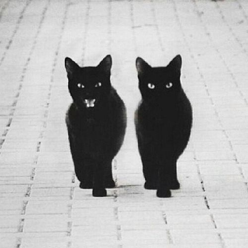 Black cat ? All_shots Artsick At_diff Amselcom bbwbbfdroideditblackcatinstaaaaahineartvscoinstaxig_circleigersukmexturef4fvscocamvscovscoismvscoanimalanimalswag