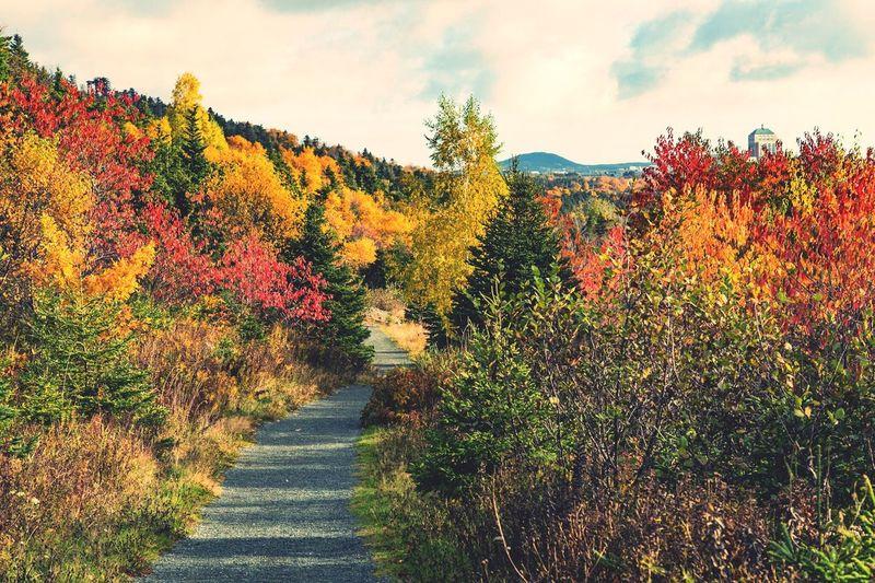 Autumn Colors Autumn Leaves Trail Park Hikes