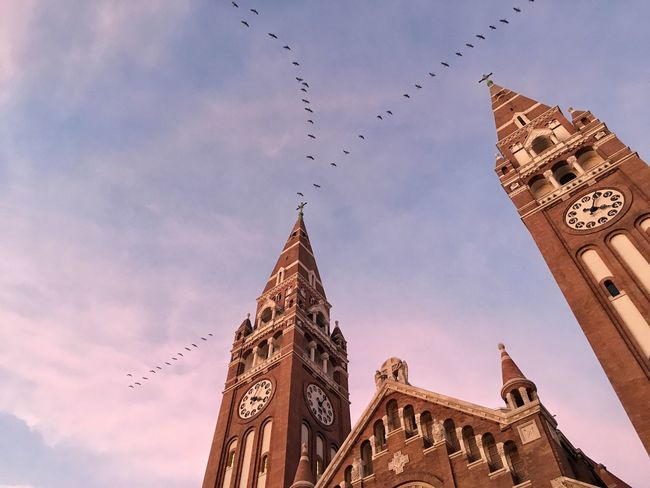 I will never get tired of this place. Each season offers new surprises! Sky Bird Architecture Cathedral Flock Of Birds No People Flying Clock Cloud - Sky Sunset Lookingup Colour Of Life Surprise Moments Szeged Magyarország Hungary