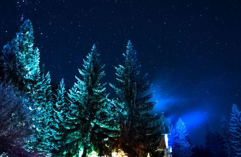 Tree Nature Night Sky No People Shiny Outdoors Cold Winter ❄⛄ Backgrounds Blue Hut Mountain Mountain Hut Stars Vitosha Mountain Sofia, Bulgaria Been There.