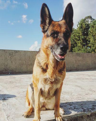 One Animal Domestic Animals Dog Pets Animal Themes Shadow Sky Mammal Sunny Day Animal Zoology No People Footpath