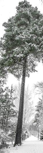 Black & White day today. Trees TreePorn Tree Winter Trees EyeEm Best Shots - Trees Blackandwhite Blackandwhite Photography EyeEm Best Shots - Black + White