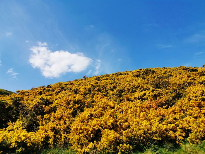 Low angle view of yellow plants against sky