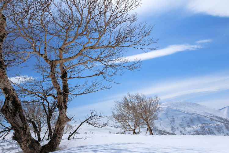 Bare tree against snow covered landscape