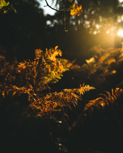 shades of autumn Autumn Autumn Collection Autumn Colors Autumn Leaves Check This Out EyeEm Best Shots EyeEm Nature Lover Landscape_Collection Light Natural Beauty Autumn🍁🍁🍁 Beauty In Nature Depth Of Field Fern Forest Landscape Nature Nature_collection Outdoors Tree