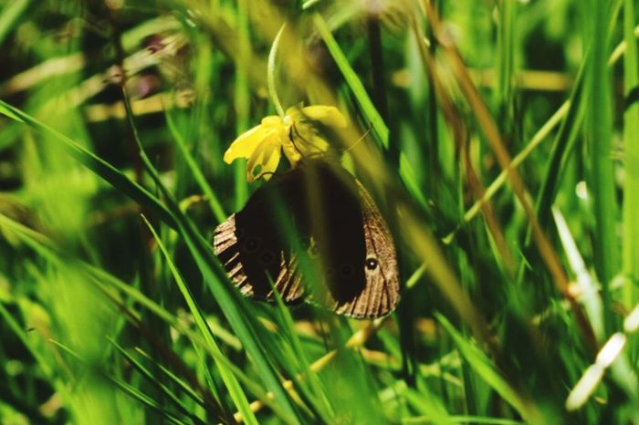 One Animal Animals In The Wild Green Color Animal Themes Nature Grass Animal Wildlife Growth Plant Day Outdoors No People Close-up Beauty In Nature Butterfly Insect