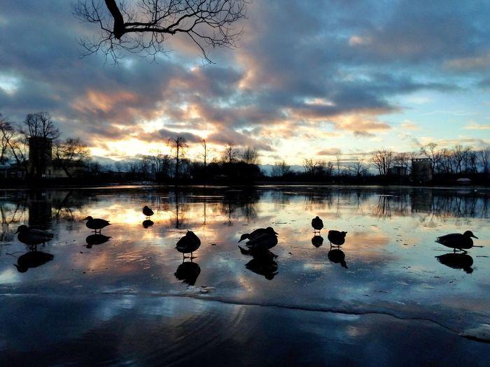 Lake Sunset December Cityscapes