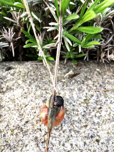 snail climb