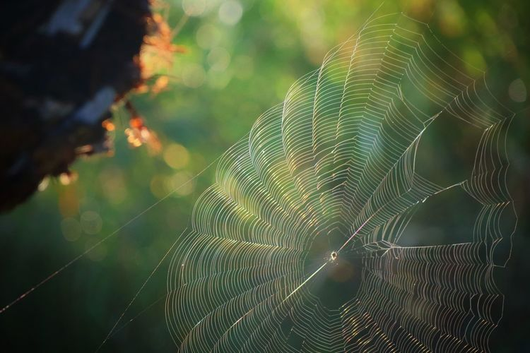 Close-up of spider web with rain drop on plant in summer morning.
