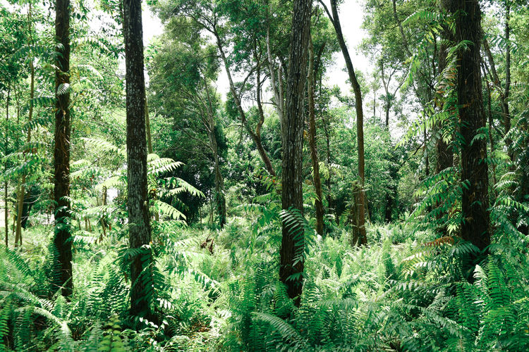 Foresty Tree Plant Forest Growth Land Beauty In Nature Tree Trunk Trunk Tranquility Green Color WoodLand Tranquil Scene Non-urban Scene Scenics - Nature Nature Day Lush Foliage Foliage No People Environment Outdoors Rainforest Bamboo - Plant EyeEm EyeEm Indonesia