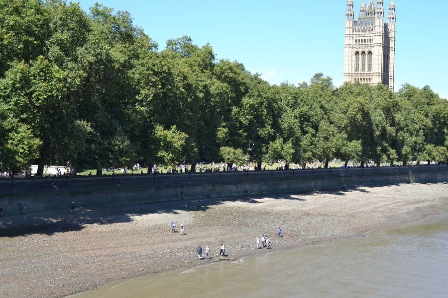 Low Tide, Dry River Bed What Are The People Doing? River Thames Trees Along The River Bank Parliament In The Distance Hot Summer Day