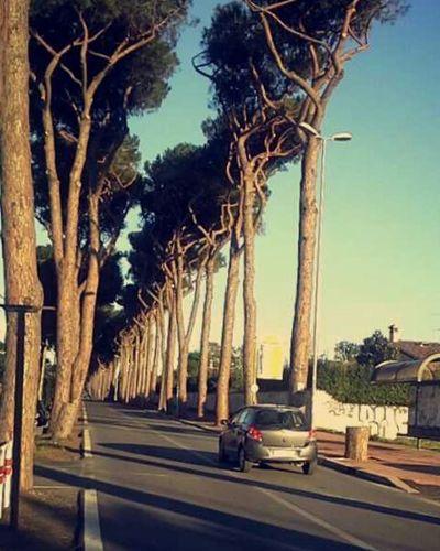 Rome Italy Cyprustree Adventure Heylookatthis