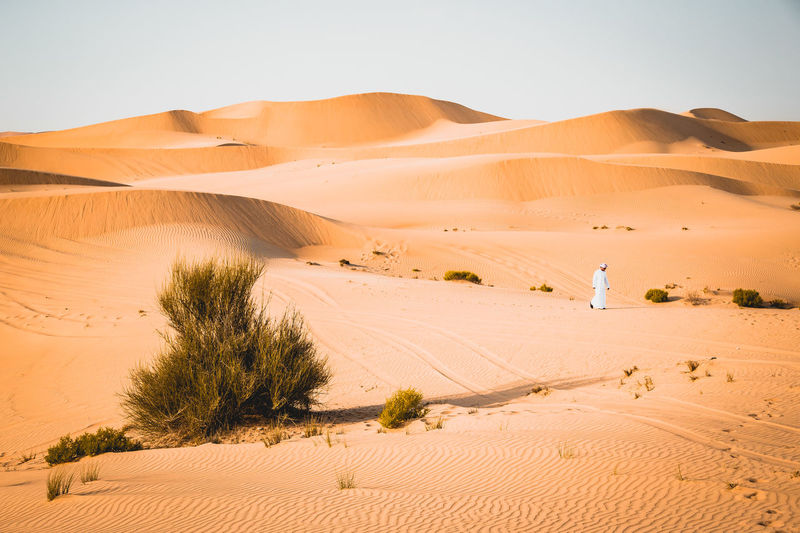 Desert Sand Dune Sand Landscape Land Scenics - Nature Arid Climate Climate Environment Tranquil Scene Tranquility Plant Sky Non-urban Scene Nature Tree Remote No People Beauty In Nature Day Outdoors Atmospheric