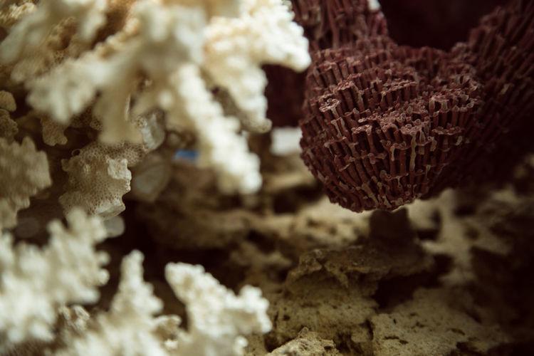 Close-up of ice cream on land
