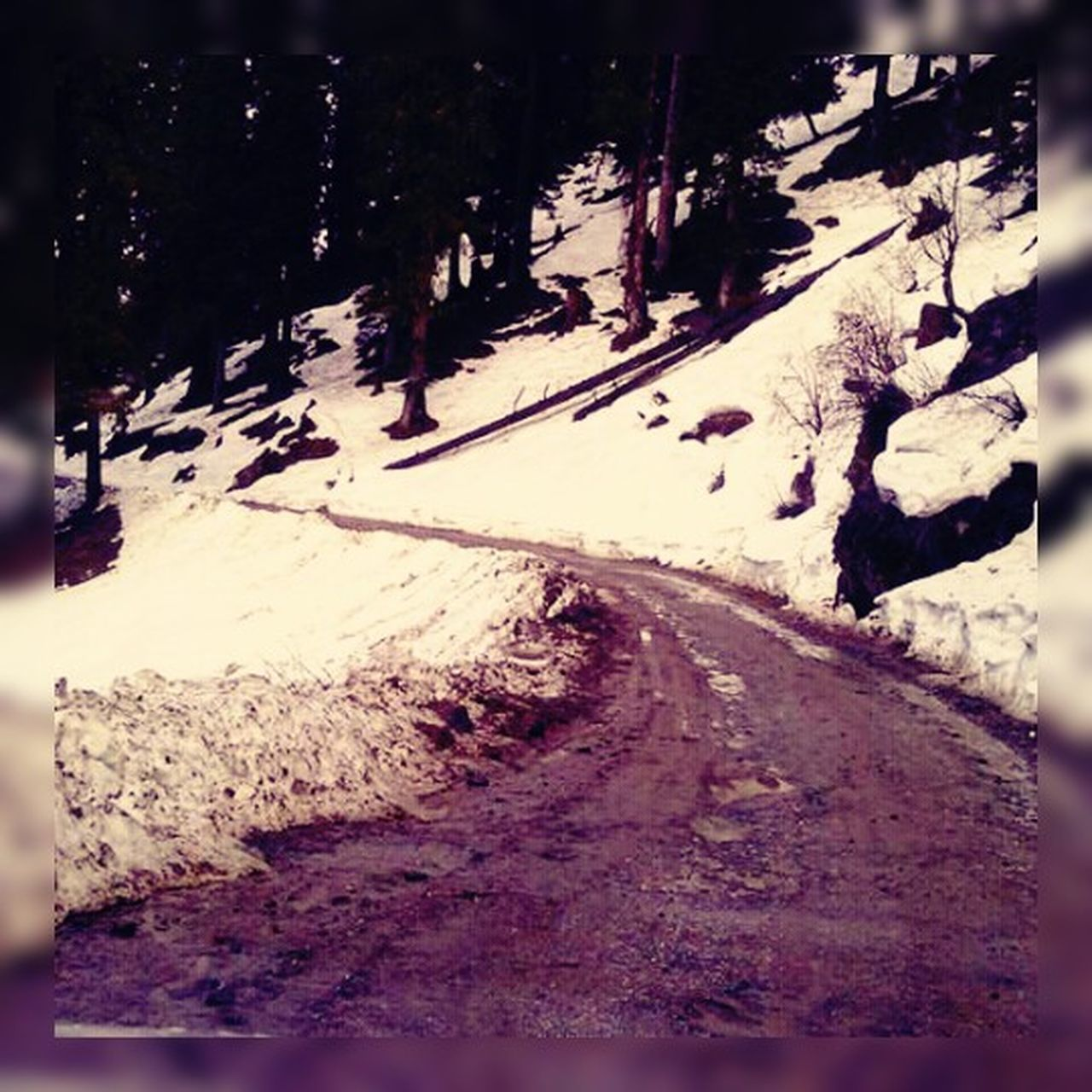 snow, cold temperature, outdoors, winter, road, tranquility, tree, nature, day, no people, beauty in nature