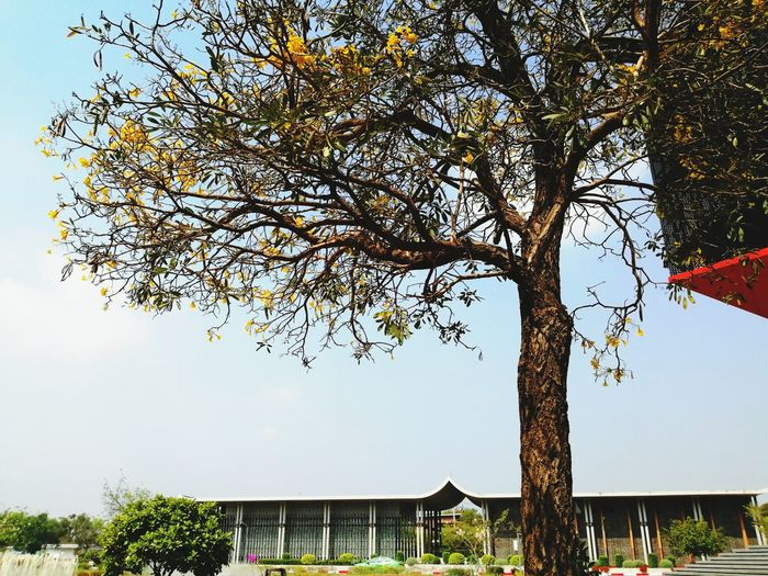 Low angle view of flowering tree by building against clear sky