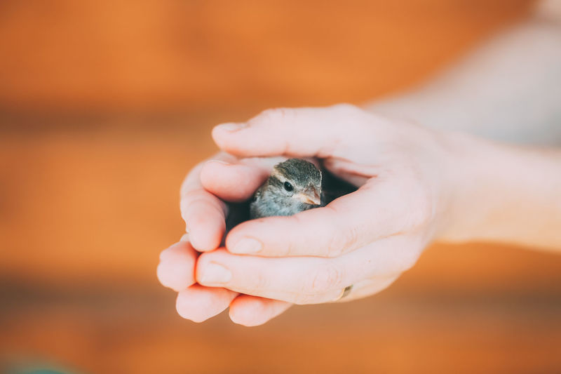 Close-up of person holding bird