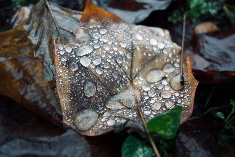 Close-up of raindrops on dry leaf