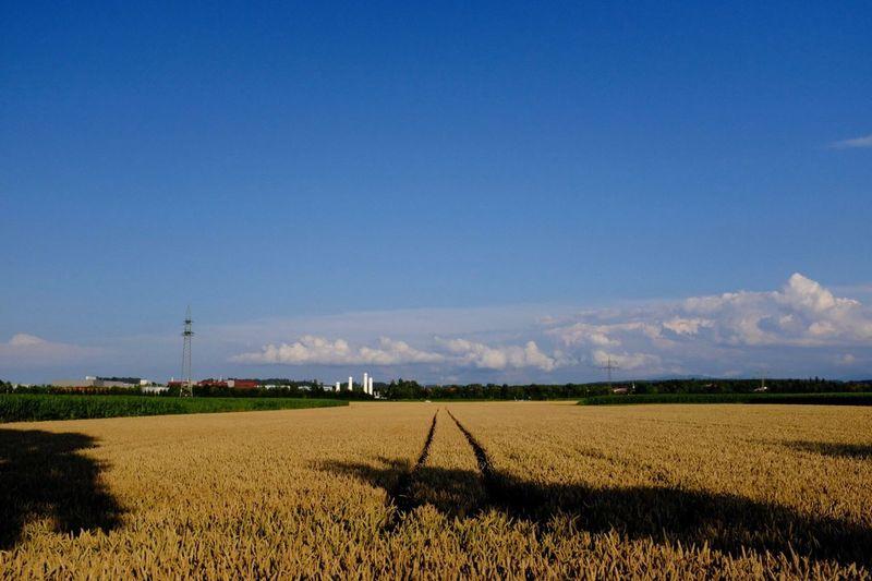 Schongau Sky Field Landscape Environment Land Sky Field Landscape Environment Land Plant Growth Crop  Farm