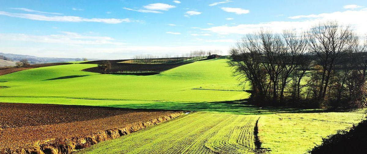 Sky Plant Cloud - Sky Nature Landscape Green Color Environment