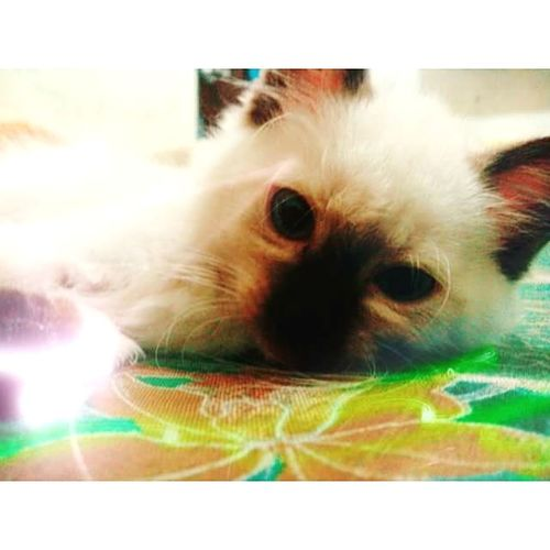 HASH. Cats Catsagram Petlover Catselfie Meow! Cats Of EyeEm