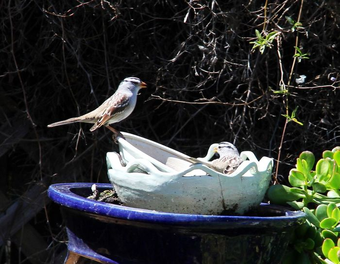 What Does Peace Look Like To You? Sunbathing together, that's what peace looks like. Birds Backyard Birder