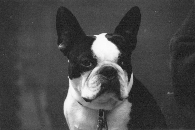 Ufo Bulldog