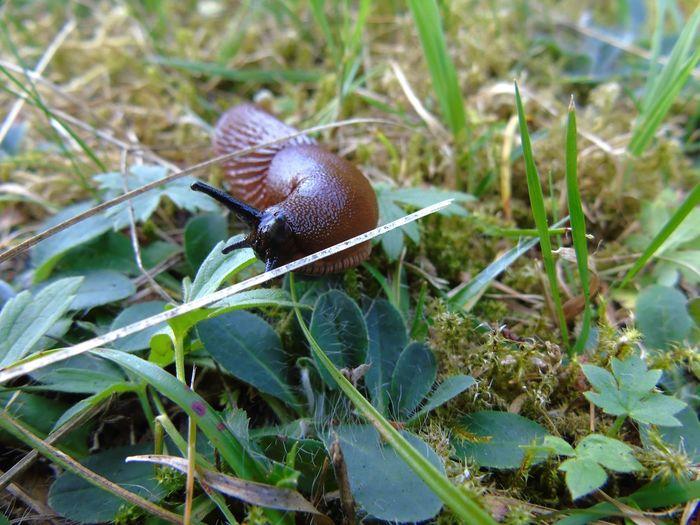 Snail in hot
