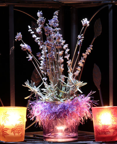 Blossom Candlelight Celebration Close-up Decor Decoration Flame Flower Flowers Focus On Foreground Fragility Growth Holiday - Event Homöopathisch Illuminated Indoors  Lavandula Lavender Lavenderflower Night Nightscene Pflanzliche Drogen Plant Still Life Still Life Photography