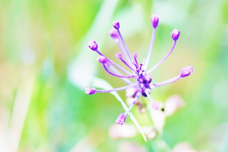 Flowering Plant Flower Plant Fragility Vulnerability  Beauty In Nature Freshness Close-up Focus On Foreground Flower Head