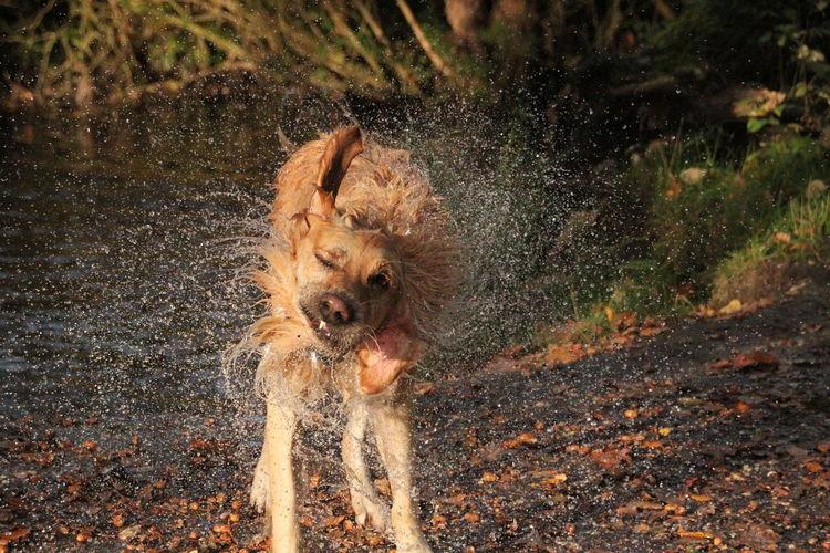 Wet Wet Dog