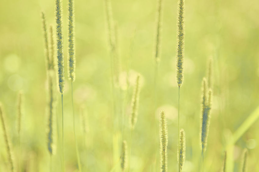 WiddumerWeiher_2017_07_9983 Backgrounds Bokeh Close-up Freshness Grass Green Color Nature No People Outdoors Sommergefühle