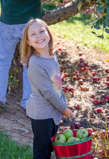 an adorable little girl picks apples in a Michigan USA orchard Autumn Females Happy Active Basket Caucasian Child Childhood Day Fall Girl Kid Michigan Orchard Nature One Person Outdoors Picking Apples Seasonal Tree