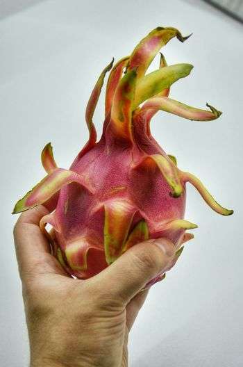 The beautiful Pitaya, the Dragon Fruit.Pitaya Dragonfruit Exotic Fruit Exoticfruit Fruitporn Foodphotography Foodporn Foodgasm Loves_food Gnam