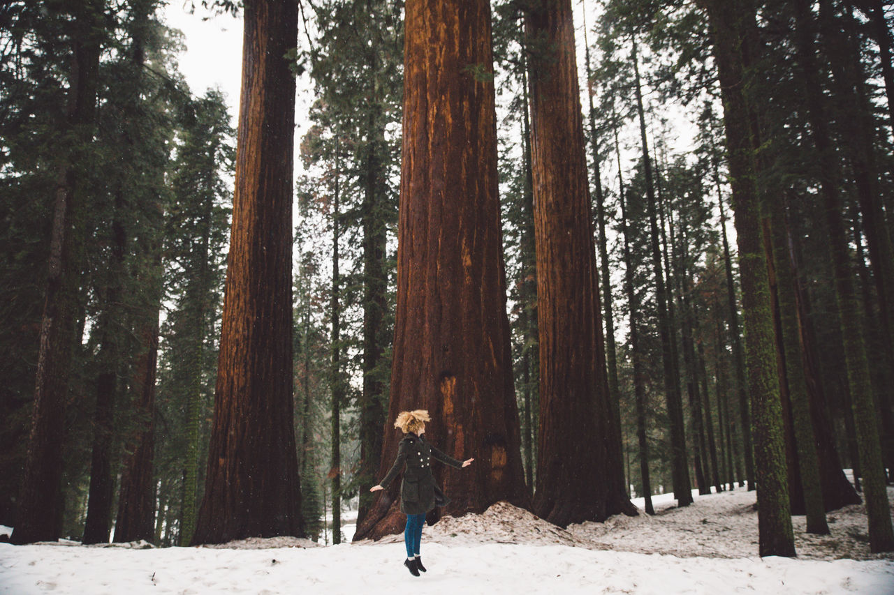 Woman jumping amidst trees in forest during winter