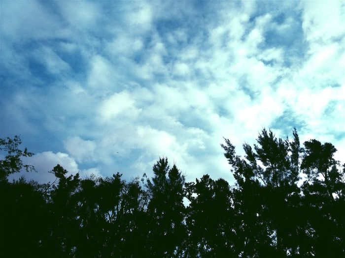 hey. newbie here. Sky Skyporn Sky And Clouds Skylovers Sky And Trees Naturelovers Nature Photography Nature Clouds Color Blue Sky Blue First Eyeem Photo