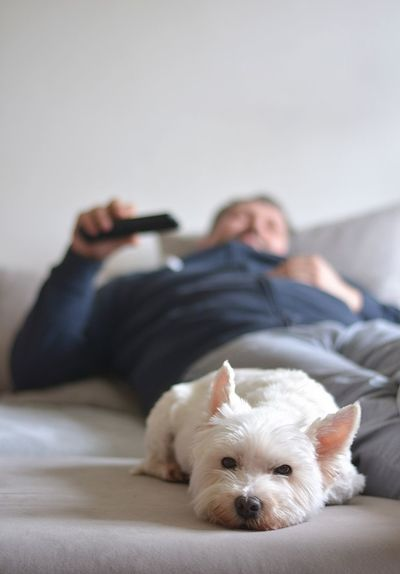 home comfort when watching TV -dog from the shelter Man Canine Dog Domestic Domestic Animals Furniture Home Comforts  Home Relax Indoors  Little Living Room Mammal Mammals One Animal Pedigree Pet Pets Siting Sliping Sofa Terrier