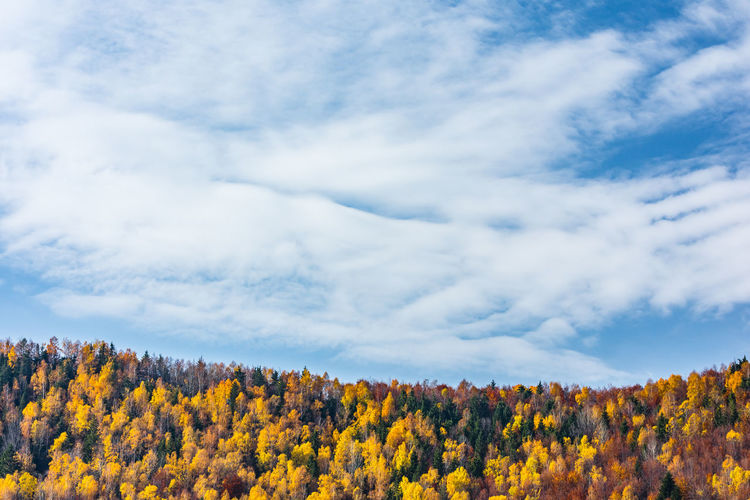 Scenic view of yellow flowering trees against sky during autumn