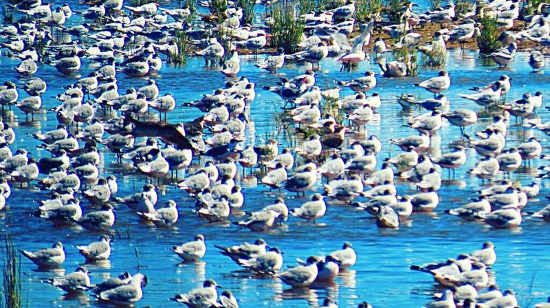 Canon Sx50 The Purist (no Edit, No Filter) EyeEm The Best Shots Moment Lens Remember Summer  Nature_collection My Unique Style Bird FromChile Hello World