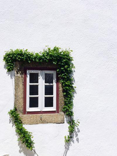 Window Leaves Wall White Enjoying The View Simplicity Pure View Enjoying Life