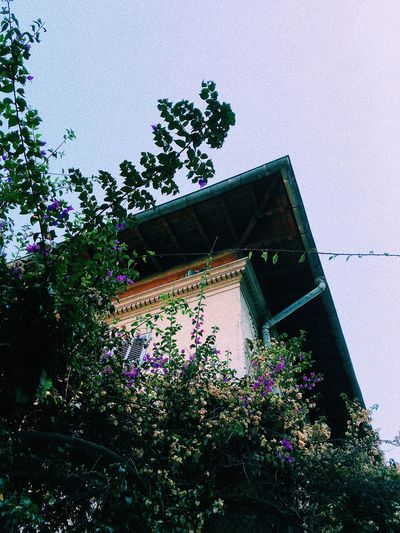 Low angle view of flowering tree and building against sky