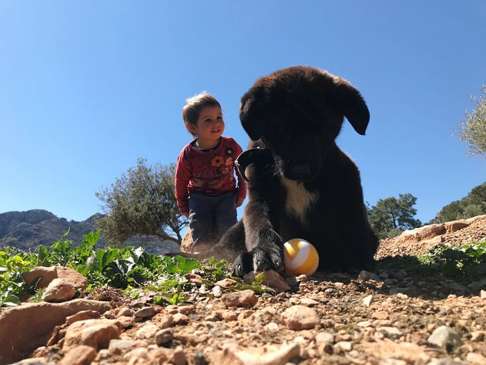 dog child and play Child Childhood Males  Sunlight Two People Men Nature Sky Boys Leisure Activity Real People Clear Sky Casual Clothing Day Family Land People Togetherness Lifestyles Outdoors