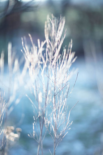 close-up of wilted plant during winter Beauty In Nature Close-up Cold Temperature Day Dead Plant Dried Plant Focus On Foreground Fragility Garten Growth Januar Nature No People Outdoors Plant Schnee Selective Focus Snow Sunlight Tranquility Vulnerability  Wilted Plant Winter