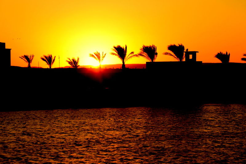 Scenic view of silhouette palm trees against orange sky