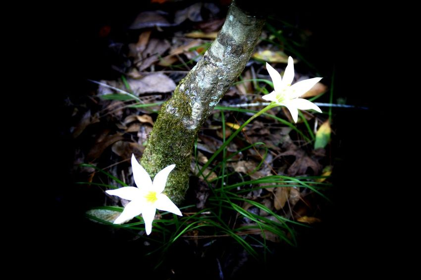 A couple little white flowers in the middle of the forest... Getting In Touch Escaping Taking Photos Forest Nature